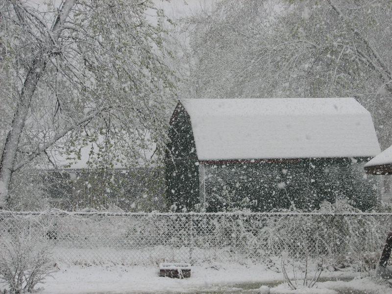 March Winter backyard