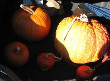 Our_pumpkin_treasure_haul