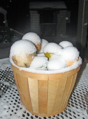 Snow_on_gourds