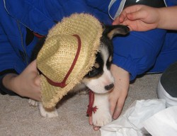 Truman_avec_chapeau_de_cowboy
